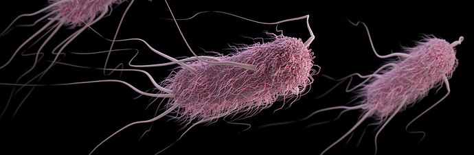Escherichia-coli